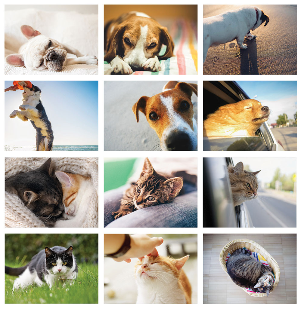 Maxxipaws Imagery